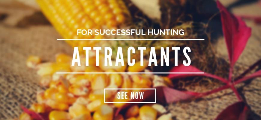 Attractants